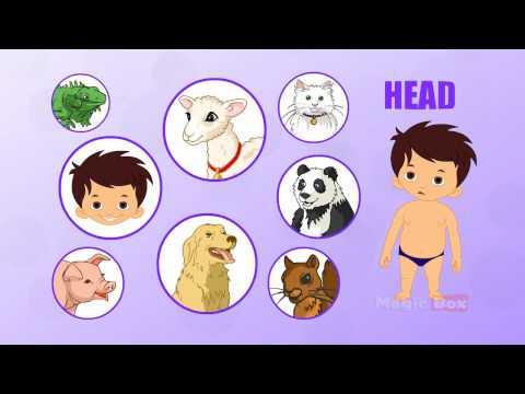 human body parts tamil preschool